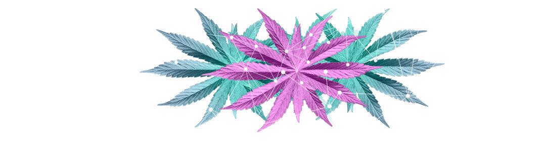Vita Hempire: Innovation & Sustainability in Cannabis Beauty